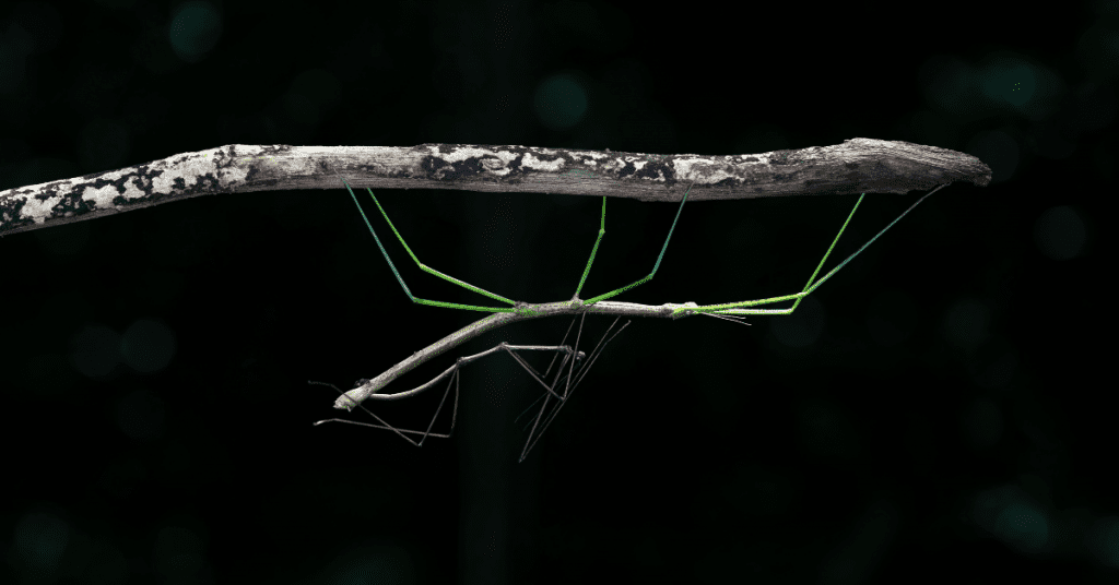 Walking sticks are the best maintenance free pet for kids