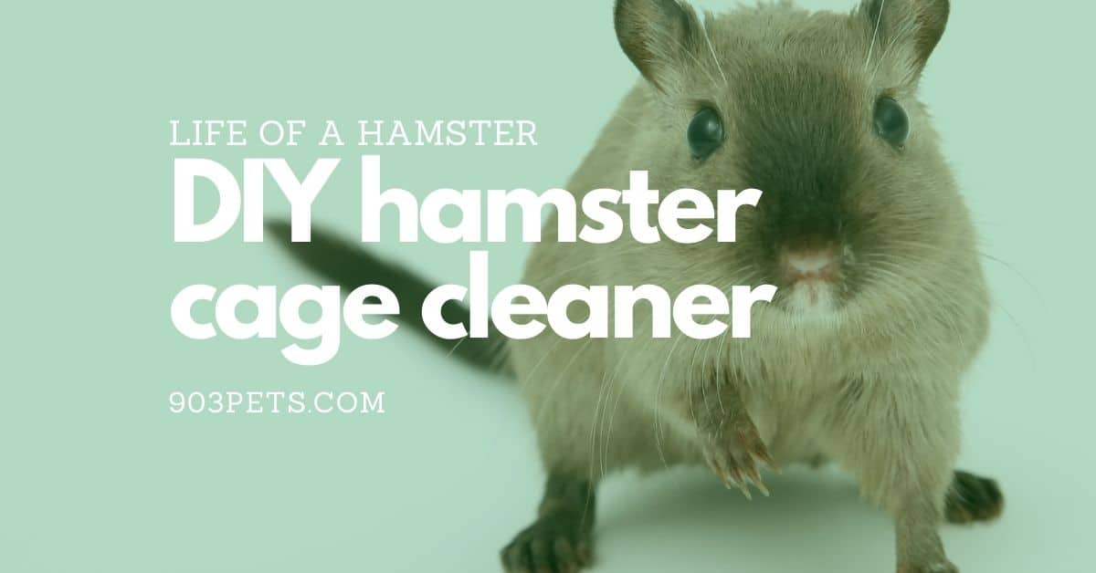 Home DIY Hamster Cage Cleaner