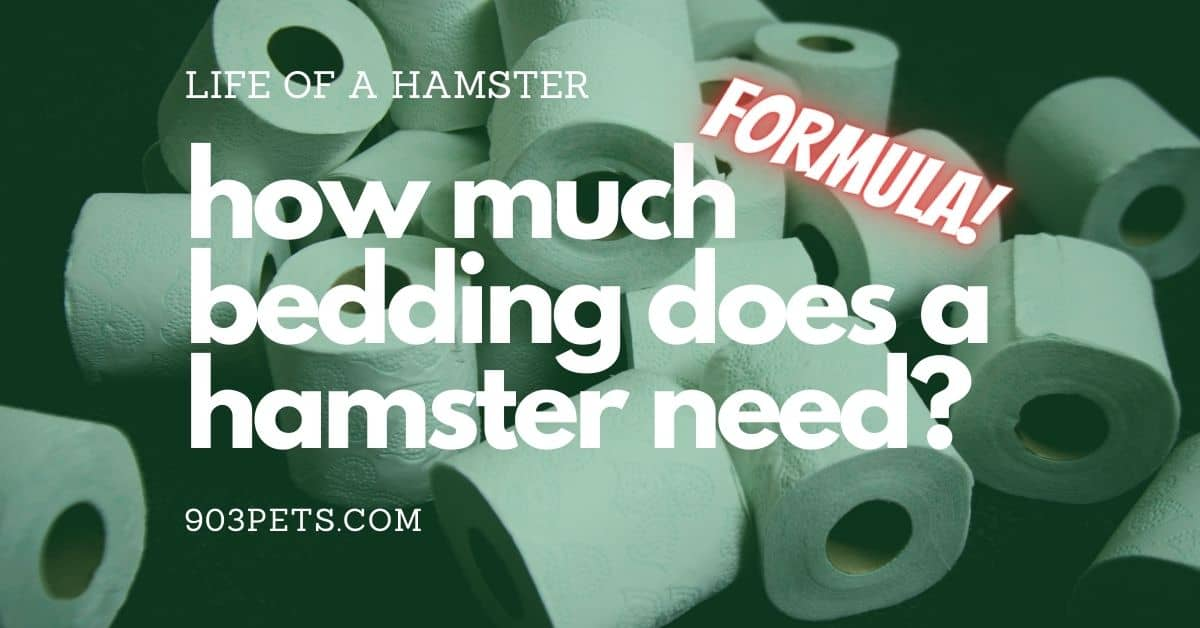 How much bedding does a hamster need - formula and types of bedding