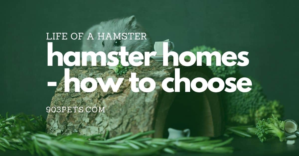 Happy Hamster Homes – How to Choose a Hamster Cage