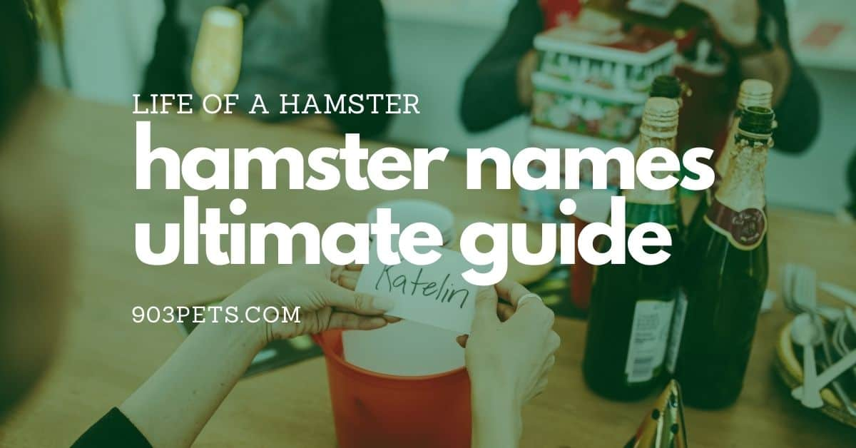 The Ultimate Guide To Hamster Names [2021]
