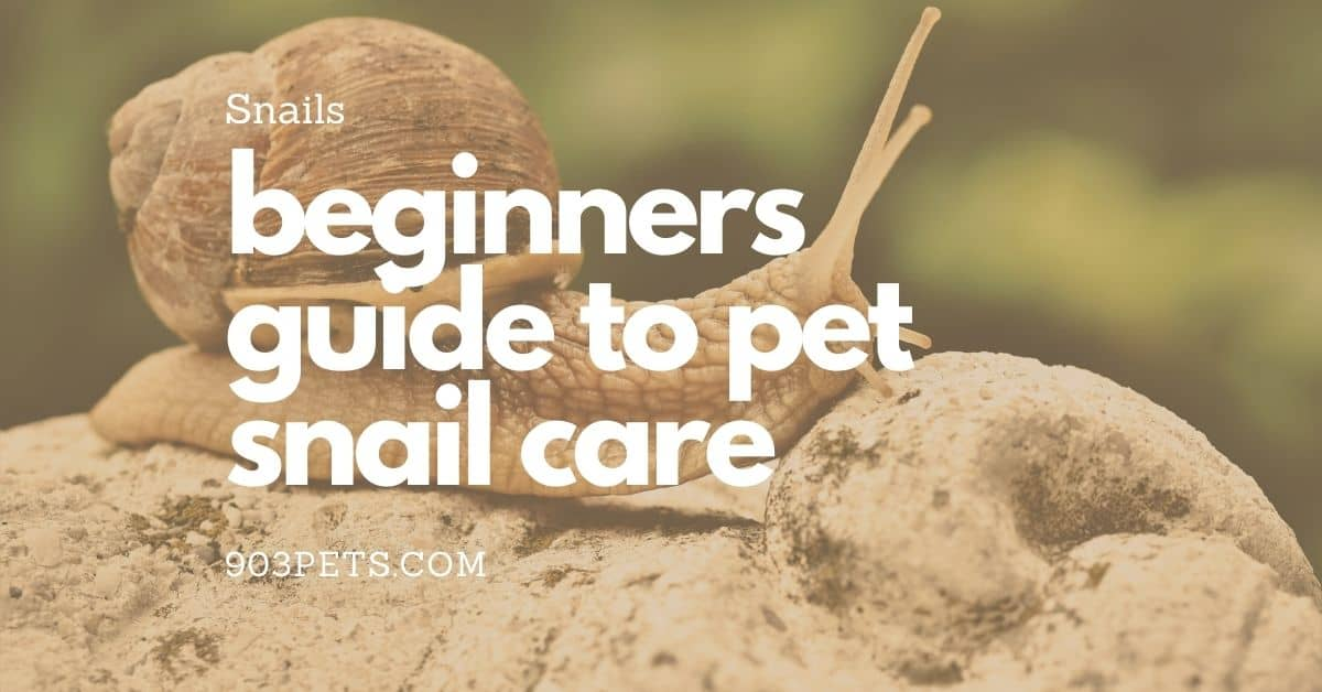 ultimate guide to pet snail care for beginners